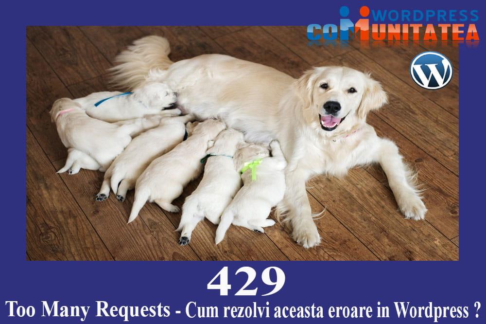 429 Too Many Requests Error - Cum rezolvi aceasta eroare in Wordpress